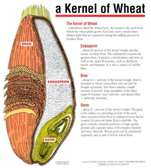 parts of a kernel of wheat
