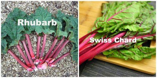 rhubarb vs swiss chard