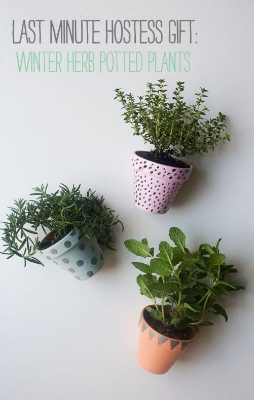 Winter Herb Potted Plants|A Cozy Kitchen